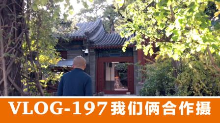 刚回到秋天的北京,就赴约大觉寺喝茶,这感觉真不赖