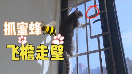 一只蜜蜂误入猫群,被6只猫围攻,蜜蜂能逃个猫咪魔爪吗?