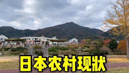 实拍日本农村真实情况,对比国内农村,谁更会享受?