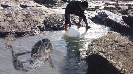 兄弟俩合力舀海边浑坑,450一斤致命毒鱼若隐若现,一旦被刺无药可解