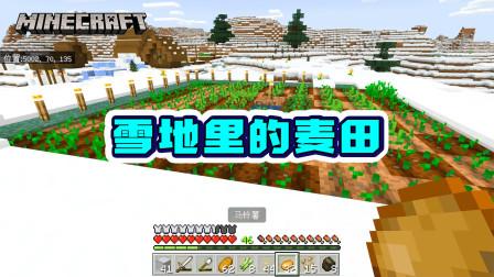 我的世界1.16版联机12:雪地里种麦子,水都被冻上了,耕地变硬了