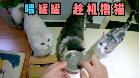 新买的罐罐到了,给猫咪开罐罐趁机撸猫,手感很不错