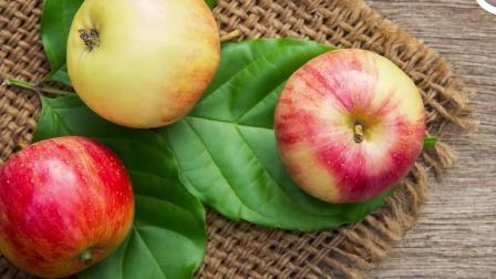 苹果皮也是非常有营养的 艾米咕噜大自然小课堂 26 快剪  1118174009