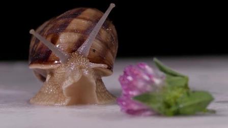蜗牛的嘴里有一万多颗牙齿 艾米咕噜大自然小课堂 21 快剪  1119154621