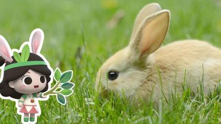 小兔子最爱吃的不是胡萝卜而是青草 艾米咕噜大自然小课堂 25 快剪  1119153532