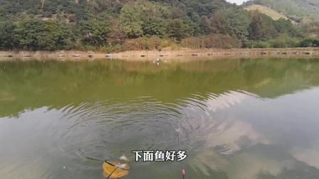 这鱼钓得好爽,一条接一条,隔着屏幕都觉得兴奋