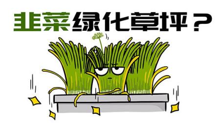为什么大家不用韭菜去绿化草坪?