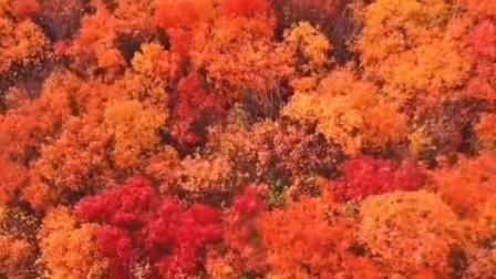 平阴的秋天