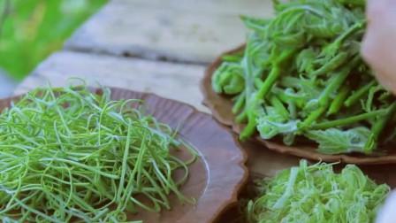 美食猎奇:一盘炝南瓜尖,一盘鸡蛋瓜叶丝,李子柒准备清淡的晚餐