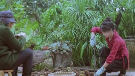 美食猎奇:李子柒拿起一根竹竿,背着箩筐,徒步到山上打板栗