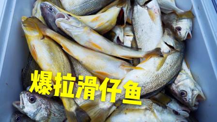 海上风车场爆拉滑仔黄花鱼,疯狂钓友一晚收获过百斤