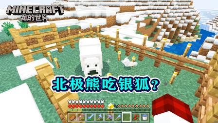 我的世界299:北极熊翻入围栏,然后银狐就消失了,是被吃了吗?