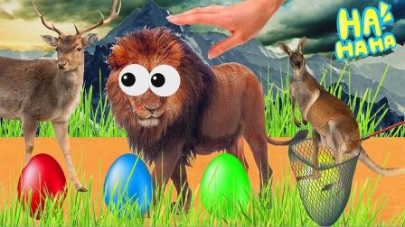 动物妈妈们在惊喜蛋里寻找动物宝宝