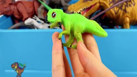 美国时尚儿童,认识恐龙色彩,一起来看看吧