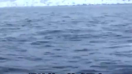 镜头拍下一只跟船员一起玩丢球游戏的白鲸,我上辈子可能是只狗子