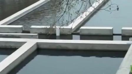 养殖白点鲑 要配备孵化车间和室外养殖池 具体该如何建造