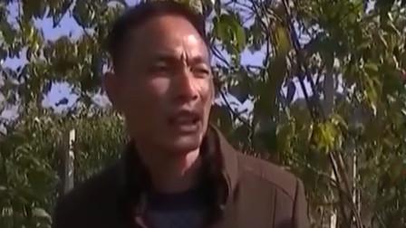 亲兄弟俩种植百香果 周边农户看花了眼 哥哥找出百香果的病症