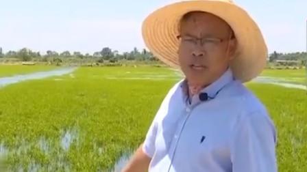 专家下基层 叙述稻田养殖小龙虾的技术 有三种稻虾综合种养模式
