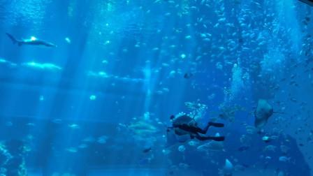 南昌海洋馆看喂魔鬼鱼视频