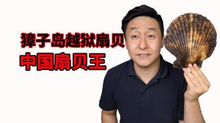 试吃中国扇贝王,别听奸商忽悠你,你根本买不到野生的