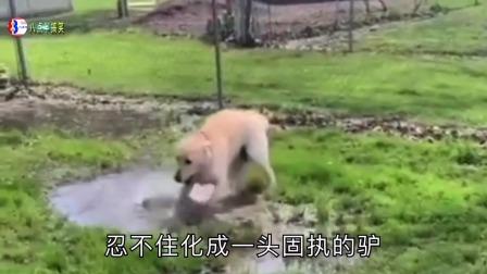 搞笑配音:前一刻稳如老狗,什么事让狗子下一秒暴跳如雷