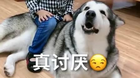 孩子放学了,坐在狗狗身上,又是被迫带娃的一天!