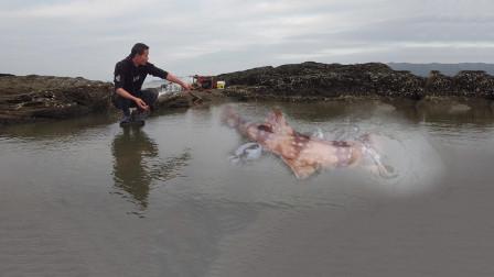 """240天没抽过的大浑坑,150一斤鲨鱼盘坑冬眠,惊现不明""""变异物种"""""""