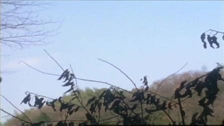 迪迦:森林冒出白色雾气,大量树木枯死,环境破坏太严重了