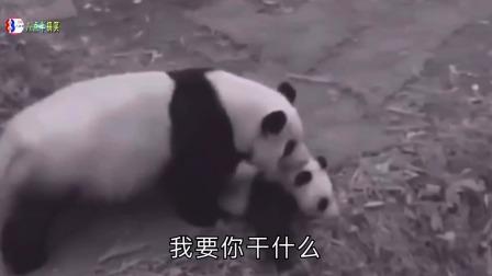 搞笑配音:熊猫妈妈这也太任性了