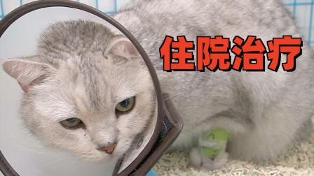 猫咪半夜吐血,紧急送医确诊胰腺炎,重症协议书都下来了