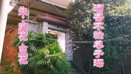 重庆一家巷子里的小店,靠着一碗猪蹄和豆花,开了20多年