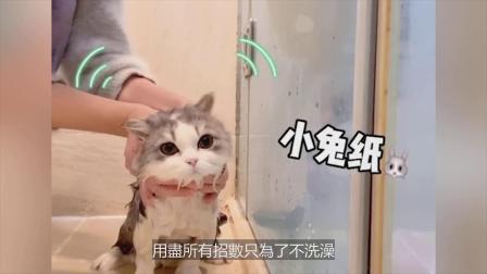 """""""可不可以不要洗澡~""""猫咪无辜大眼抱紧主人:人家我好怕"""