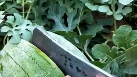 夏天里的冻西瓜,比石头还硬,得用斧头才能切开!
