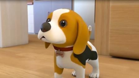 超级宝贝JOJO:这是我们家的戏精狗狗,一个吃货狗狗