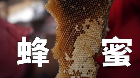 老家房子里藏着一个超大蜂巢,小伙全程无保护割蜜,结果悲剧了!
