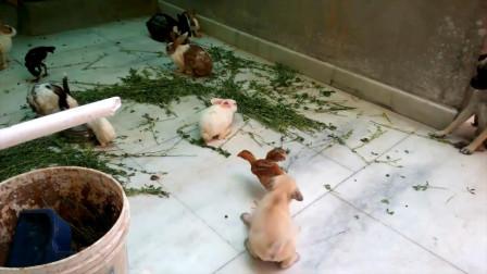 小狗狗喜欢咬其它动物的后鞧