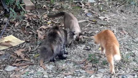 猫咪们在玩什么东西,四只猫围在一起玩耍