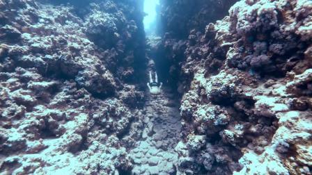 没有翼服的自由潜水