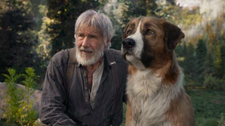 电影《野性的呼唤》:一只狗如何成为狼群的首领