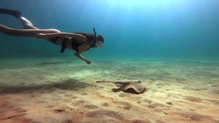 在戈登湾和黄貂鱼一起自由潜水