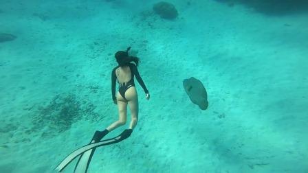 大堡礁与苏眉鱼自由潜水