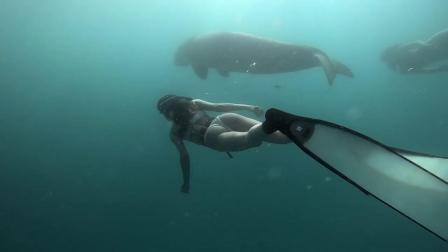 自由潜水,与儒艮共舞