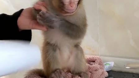 给小猴子洗个澡,它倒是很配合哦