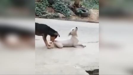 狗子的演技到底在哪里学的?这戏飙的同伴都看不下去啦