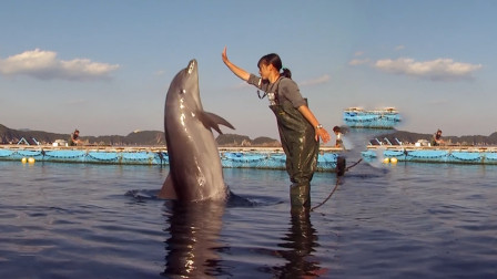 豆瓣评分9.3,一部根据真实事件改编的电影,保护海豚的故事