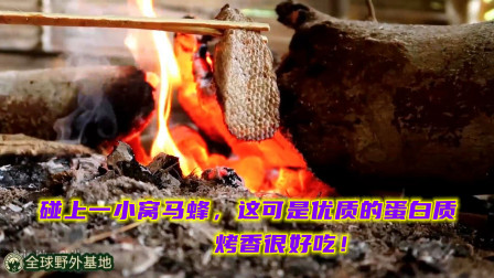 世外桃源109:碰上一小窝马蜂,这可是优质的蛋白质,烤香很好吃!