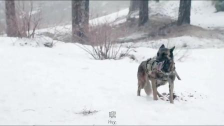 军犬是忠诚的战友,被刺伤不松口,助受伤的海豹特种兵一对三反杀
