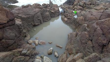 """海岛深坑昂贵野生货扎堆,剧毒黄金虎和鱼群打成一团,""""黄虎斗鲷""""呀"""