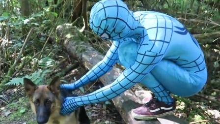 蜘蛛侠:蓝蜘蛛侠带黑背躲到了树林里!