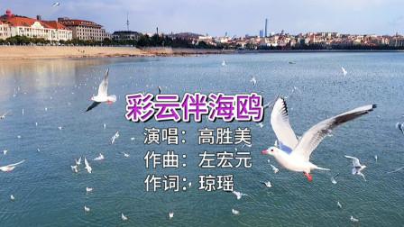 青岛冬季海边拍摄海鸥,配上高胜美《彩云伴海鸥》,好看又好听